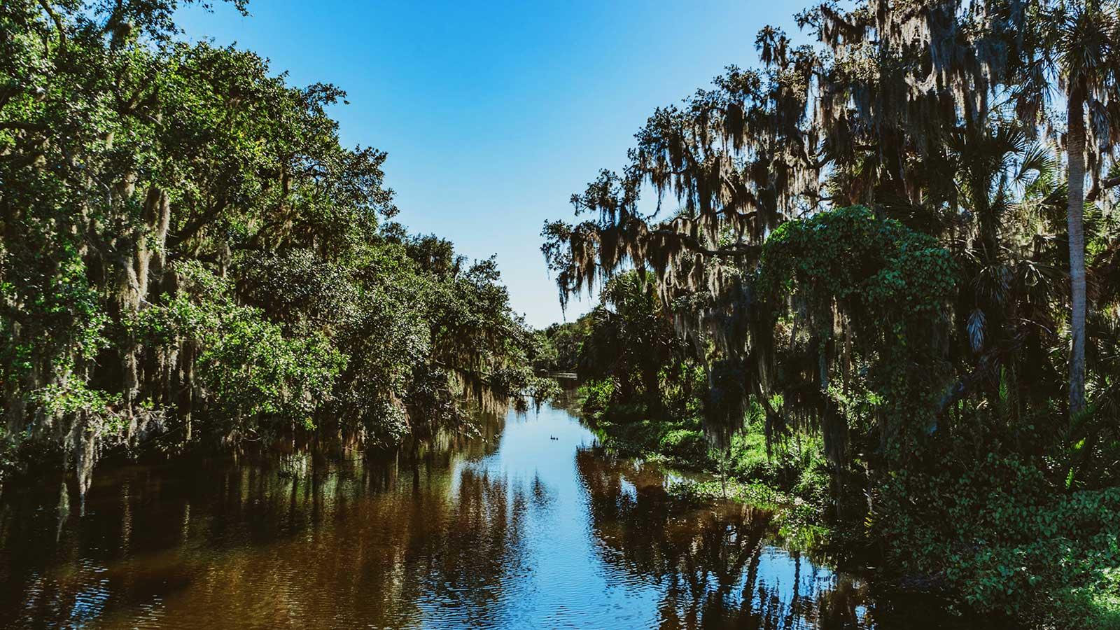 Florida-Spoil-Island--Ttampa-Bay-Estuary-Program-mc---Spoil-Island-Project---Florida