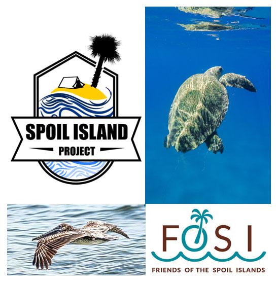 Spoil Island Project Header (Female Turtle)
